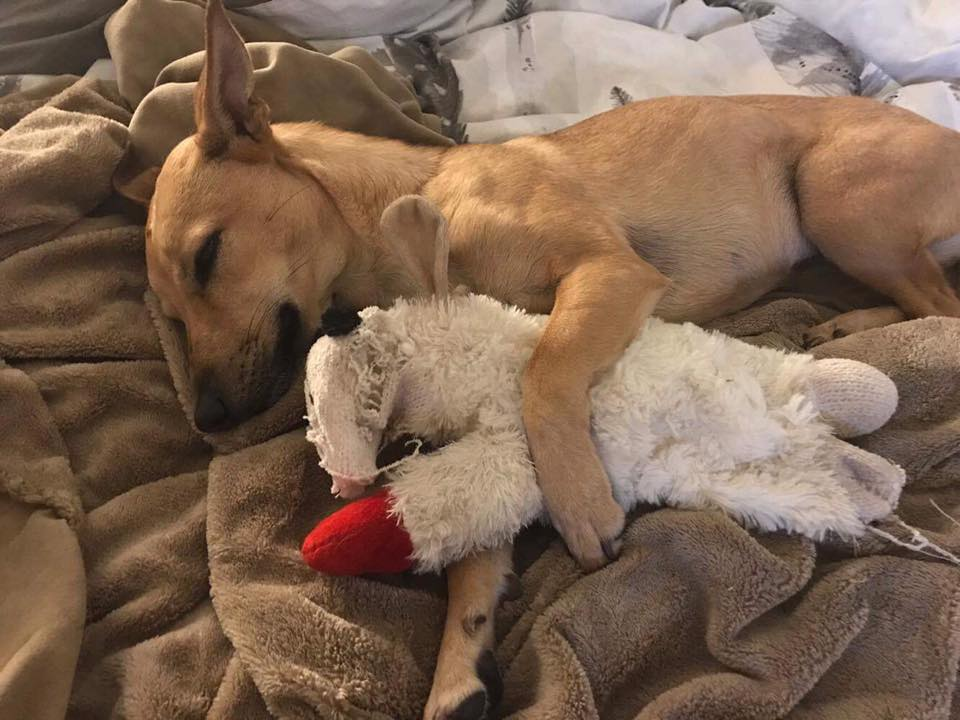 Decompression and Why It's Important to Your New Dog