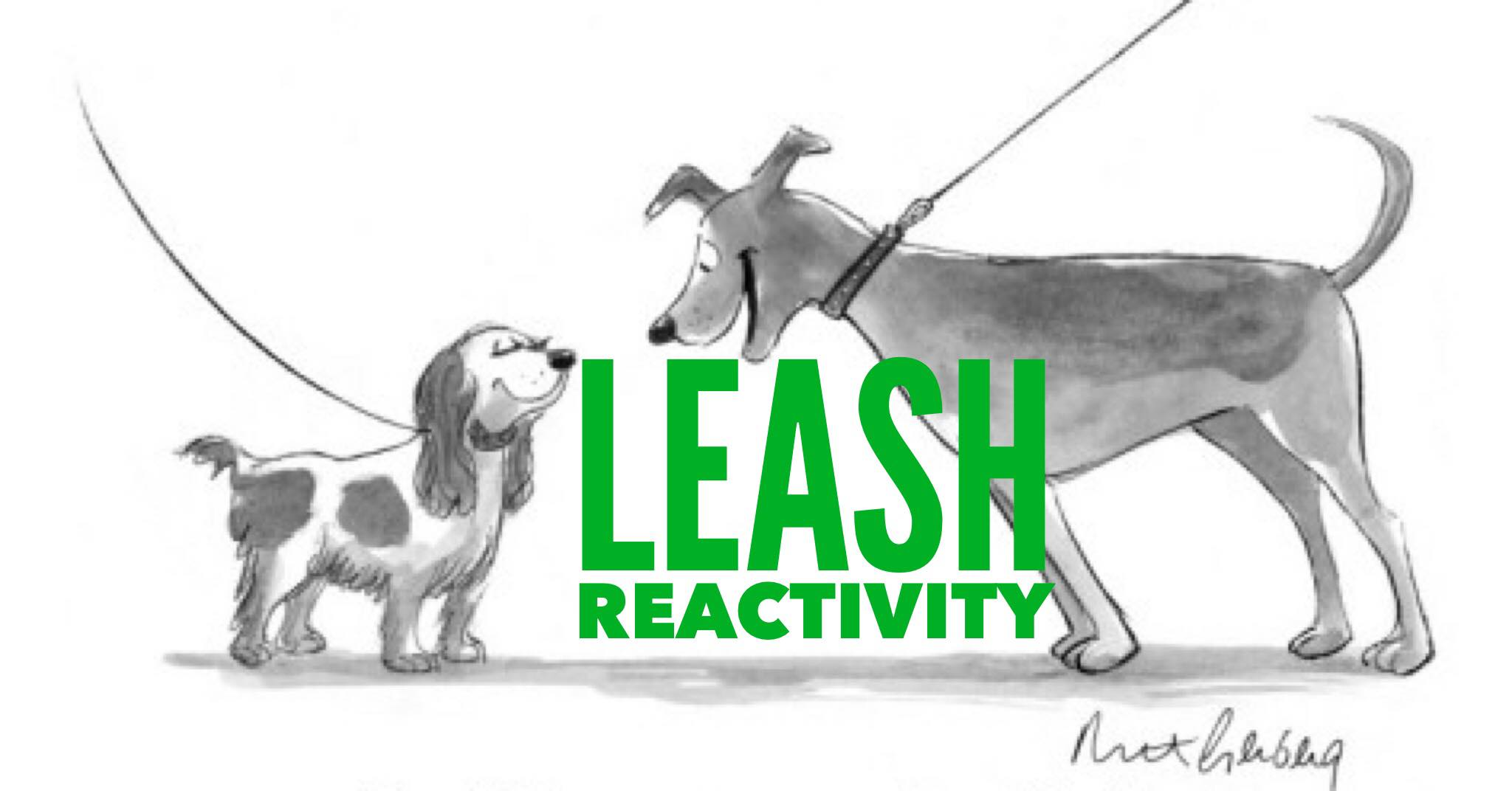 Leash Reactivity in Dogs (and the human at the end of the leash!)