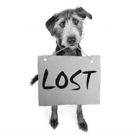 What To Do If You Have Found a Lost Dog or Cat
