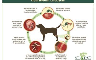 Heartworm disease—a high-level overview